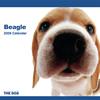 THE DOGカレンダー ビーグル 2009