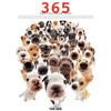 THE DOG 365カレンダー 2009