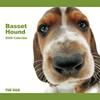 THE DOG逆輸入カレンダー バセット・ハウンド 2009