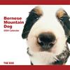 THE DOG逆輸入カレンダー バーニーズ・マウンテン・ドッグ 2009