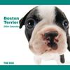 THE DOG逆輸入カレンダー ボストン・テリア 2009