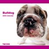 THE DOG逆輸入カレンダー ブルドッグ 2009