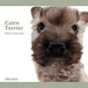 THE DOG逆輸入カレンダー ケアーン・テリア 2009