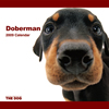 THE DOG逆輸入カレンダー ドーベルマン 2009