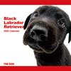 THE DOG逆輸入カレンダー ラブラドール・レトリーバー(ブラック) 2009