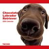 THE DOG逆輸入カレンダー ラブラドール・レトリーバー(チョコレート) 2009