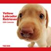 THE DOG逆輸入カレンダー ラブラドール・レトリーバー(イエロー) 2009