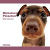 THE DOG逆輸入カレンダー ミニチュア・ピンシャー 2009