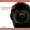 THE DOG逆輸入カレンダー ニューファンドランド 2009