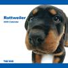 THE DOG逆輸入カレンダー ロットワイラー 2009