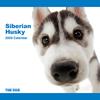 THE DOG逆輸入カレンダー シベリアン・ハスキー 2009