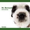 THE DOG逆輸入カレンダー セント・バーナード 2009