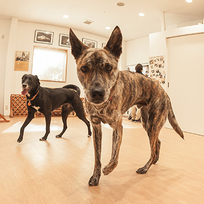 green dog square 神戸 のご案内 ペットフード ケア専門店